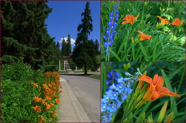 Daylilies Reader Rock Garden resize