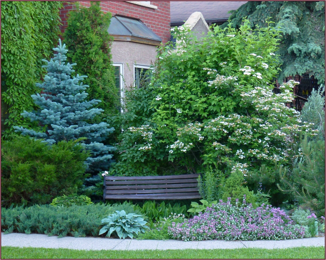 Blue spruce and bench