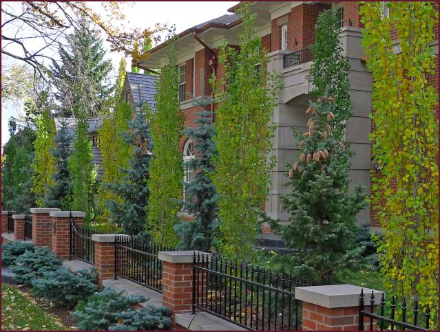 columnar aspens