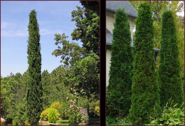 columnar forms