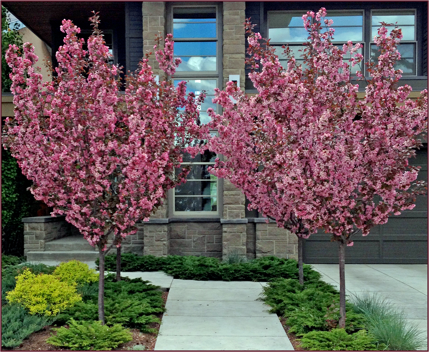 Ornamental crabapple trees have a beautiful vase shape for Trees that stay small