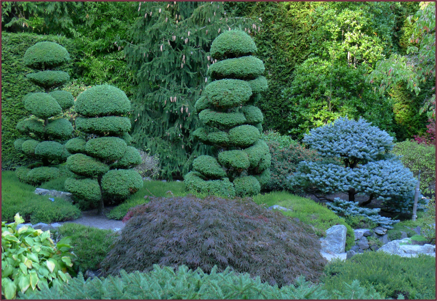 Japanese Topiary