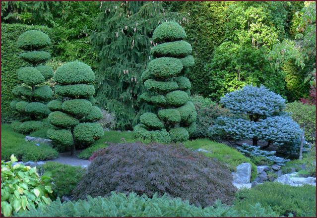 Japanese Topiary