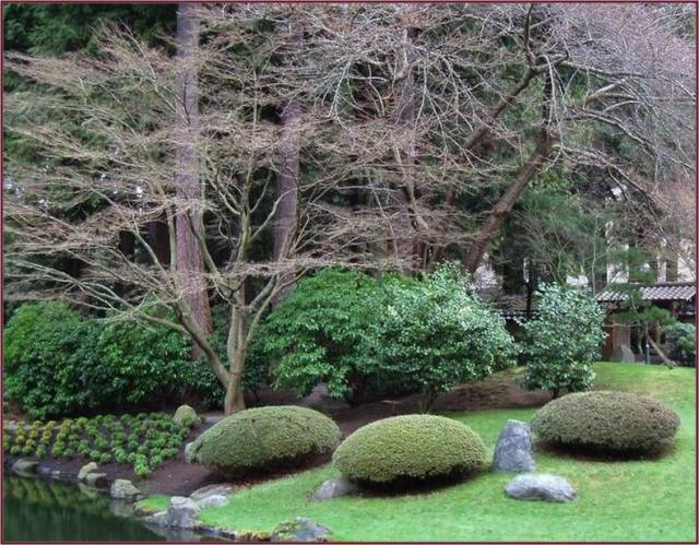 pruned mounds in Japanese Garden