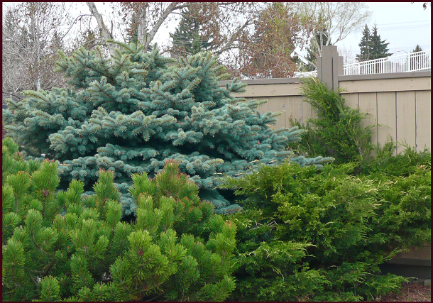 evergreen texture