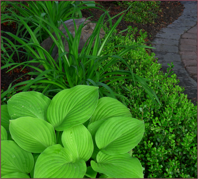 Hosta, daylily and kinnickinnick