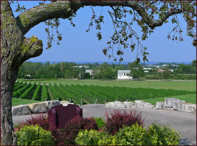 View overlooking the vineyard at Peninsula Ridge. Photo: Sue Gaviller