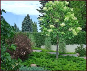 garden structure - summer resample
