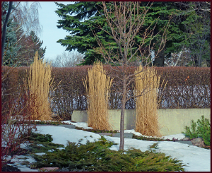 winter garden structure resample