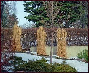 winter garden structure resample
