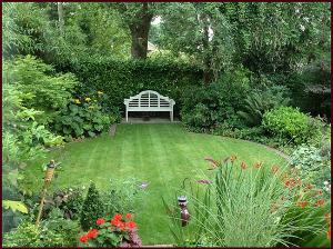 Mike's back yard - summer