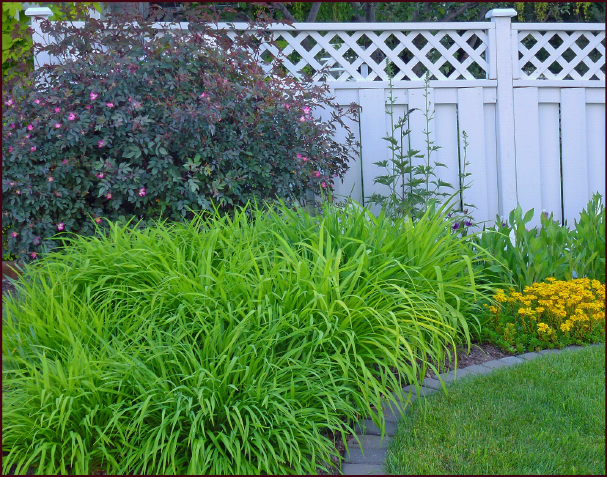 This corner planting of daylilies is large enough that the eye cannot discern whether it consists of odd or even numbers. Photo: Sue Gaviller