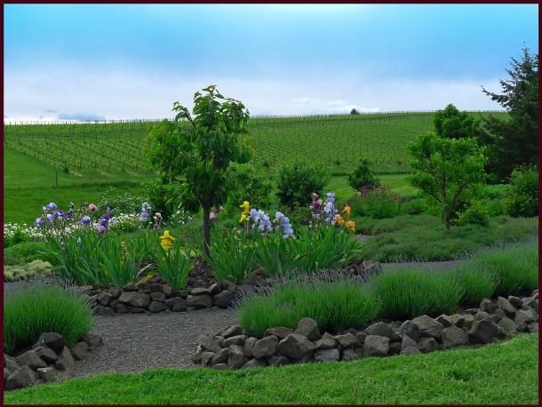 willakenzie sensory garden