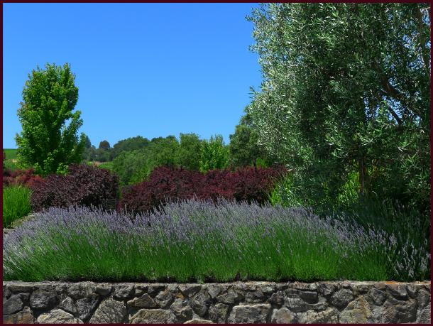 lambert bridge lavender 2