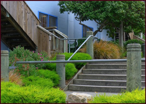 A contemporary planting, with a nautical flair in Cannery Row. Photo: Sue Gaviller