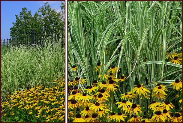 grasses-and-rudbeckia-resize