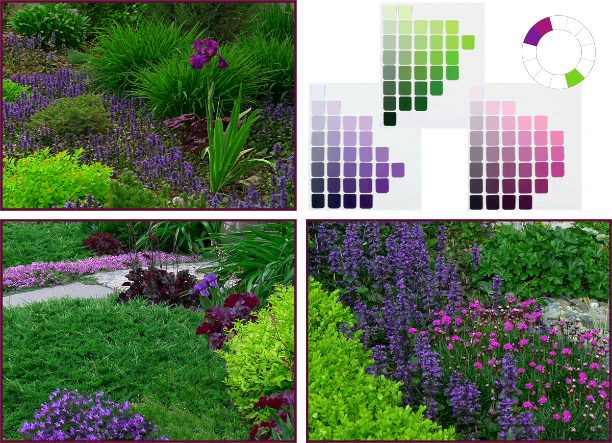 Analogous-Complementary Colour Scheme: violet (5P), red-violet (5RP) and yellow-green (5YG). Photos: Sue Gaviller