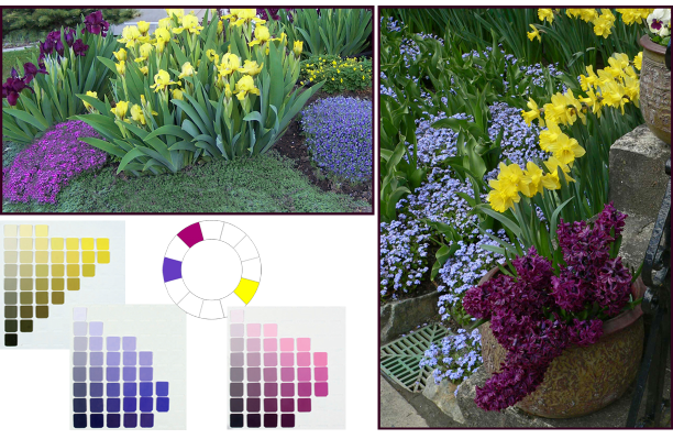Split Complementary colour scheme - yellow, blue-violet and red-violet. Photos: Top left: Cathy Gaviller. Right: Jane Reksten